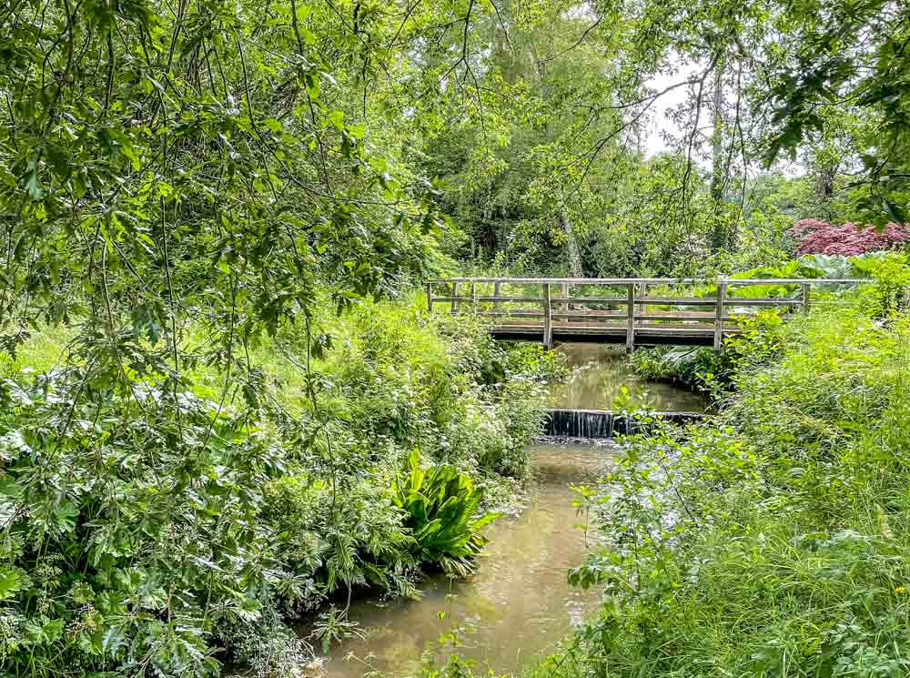 bridge in the wild garden