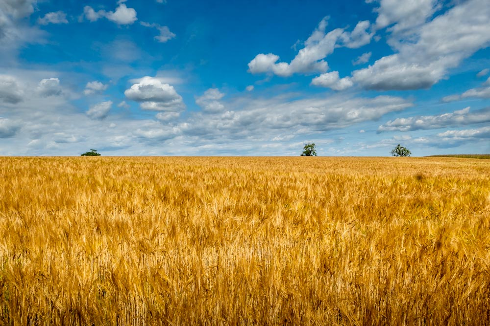 crops and blue sky and clouds