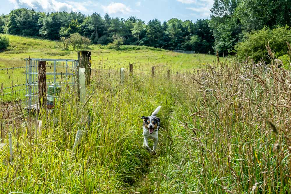 dog walking lincolnshire wolds