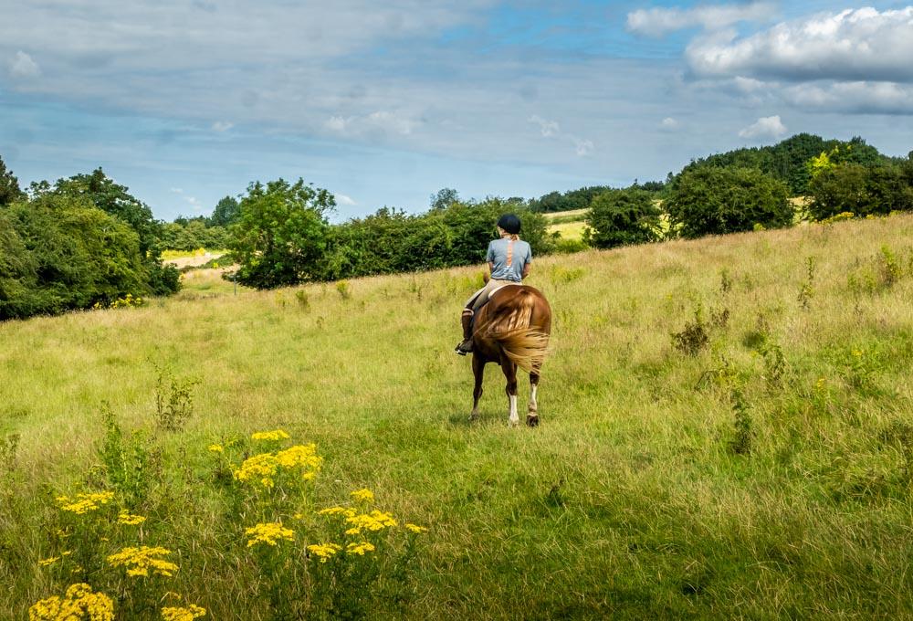 horse rider nettleton