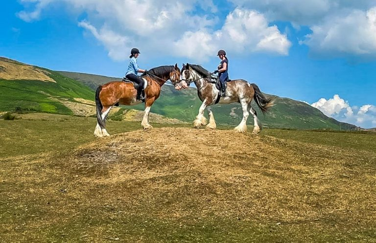 The Ride Of Your Life With Cumbrian Heavy Horses