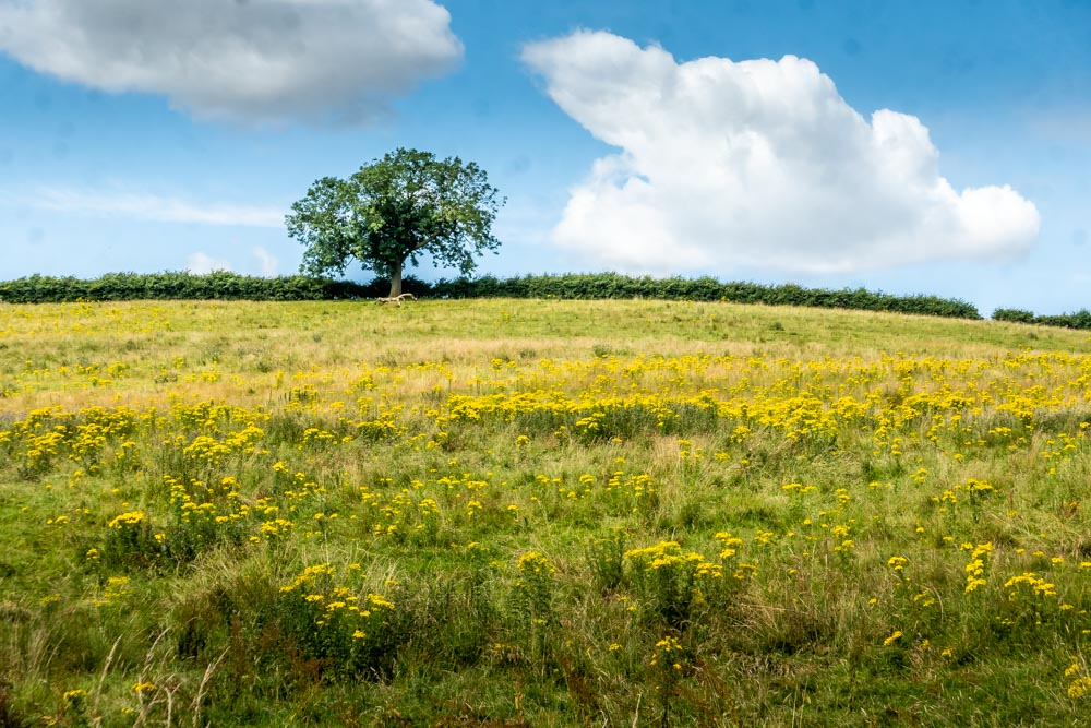 lincolnshire wolds yellow field
