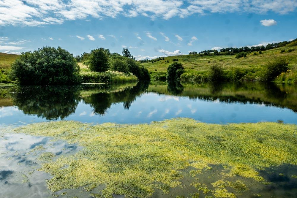 nettleton pond