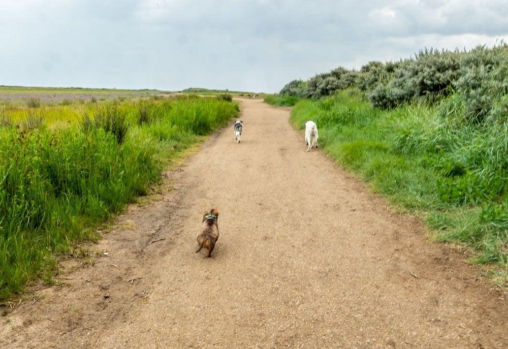 the beach path dog friendly