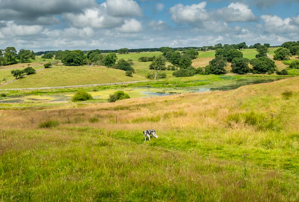 dog in north yorkshire field