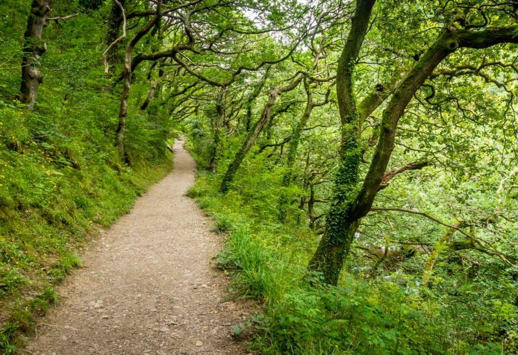 path through woods to watersmeet