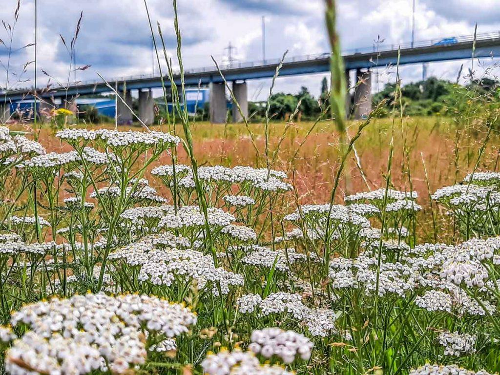 Meadows at Sheffield