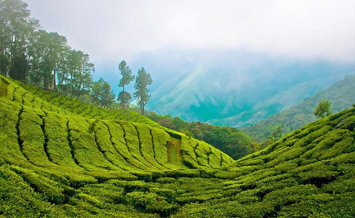 fields of  India