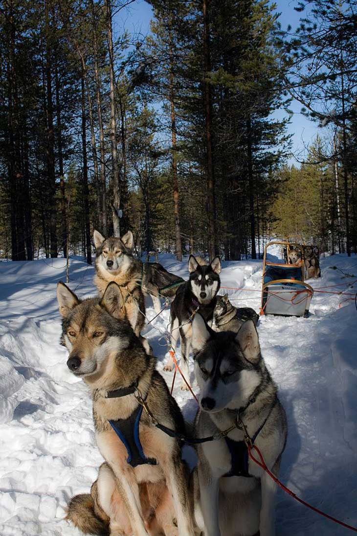 31 Norway   Husky Sledding Through Rondane National Park