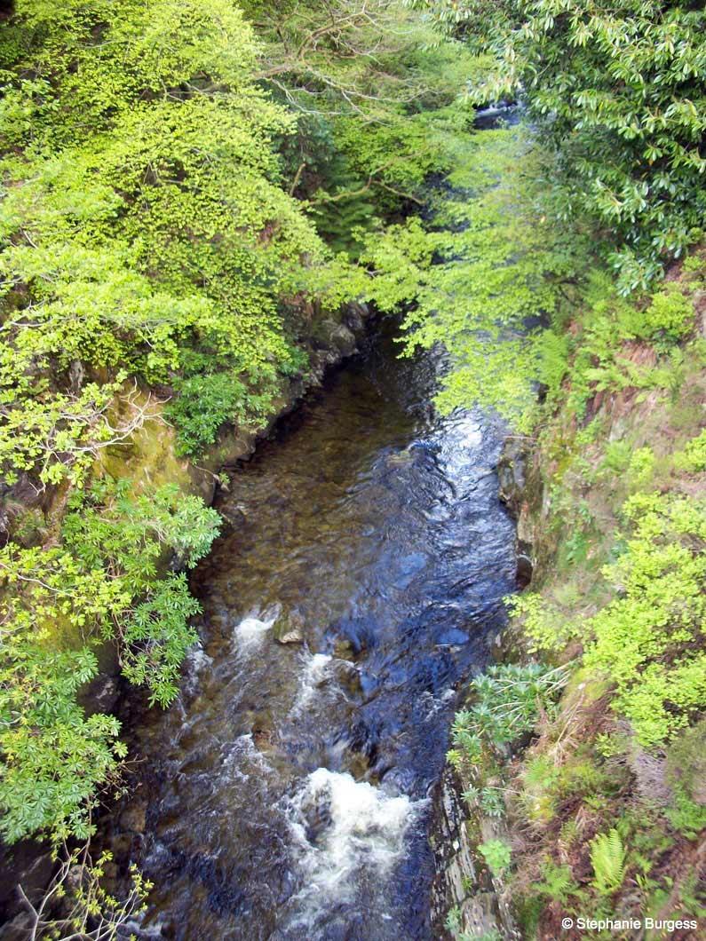 37 Springtime in Pontrhydygroes, Ceredigion