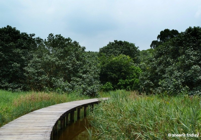 The Wetland Park, Hong Kong