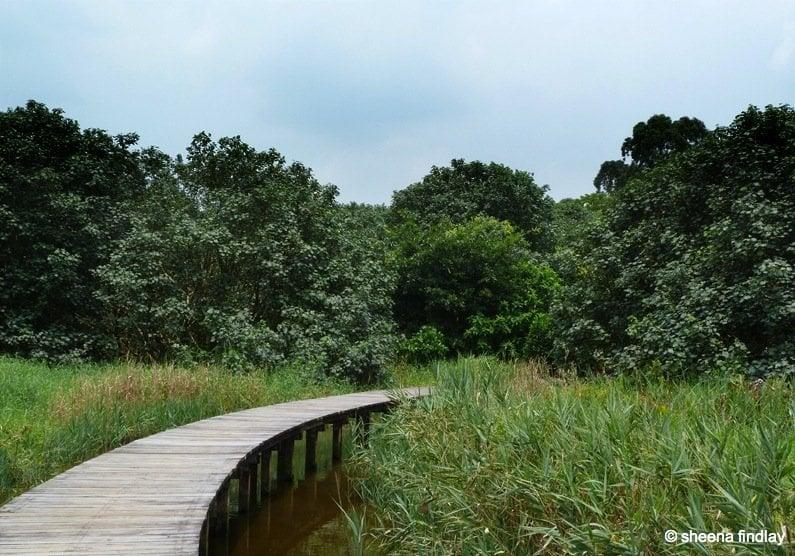 4.-Board-walk The Wetland Park, Hong Kong