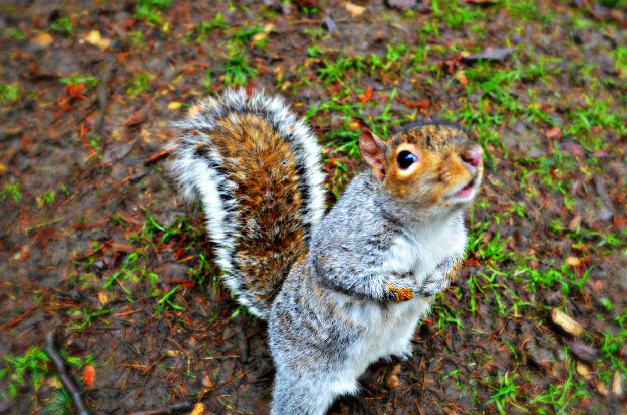 4. Friendly Squirrel - sheffield