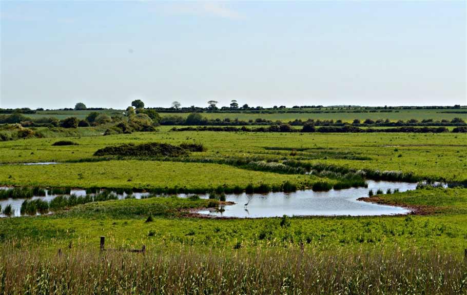 4. Marshes and little Egret- norfolk