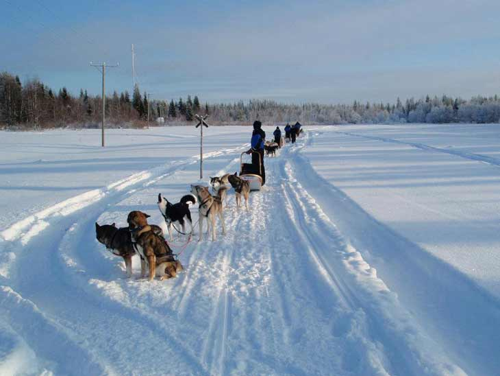 41 Norway   Husky Sledding Through Rondane National Park