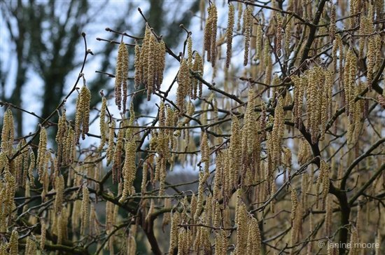 5-Catkins-walk Shining Cliff to Alderwasley circular walk via Cromford Canal