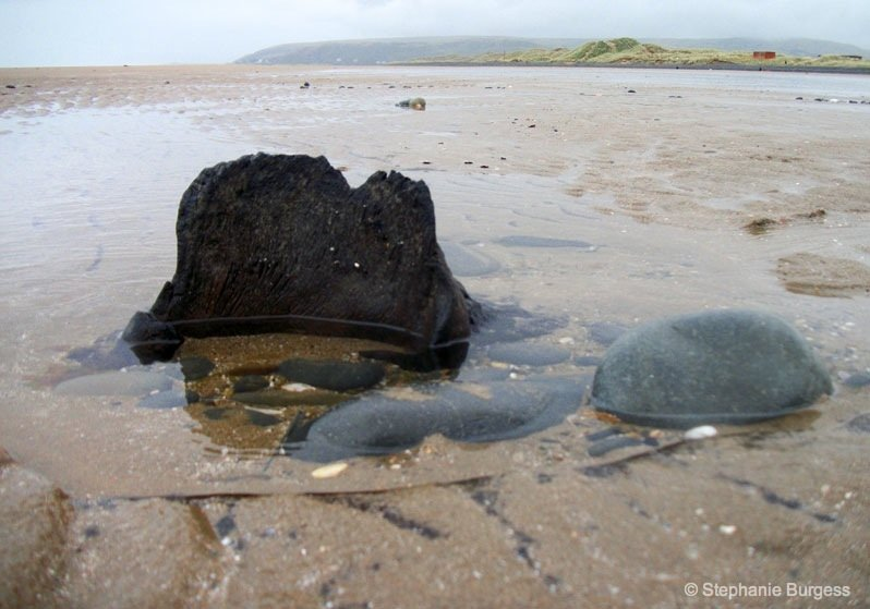 5-wales- The Bronze Age, Submerged Forest, Borth Beach