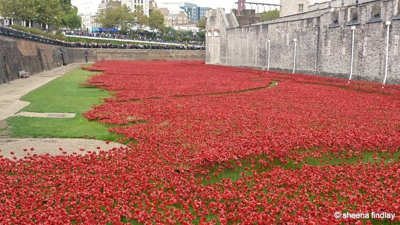 5.-Poppies The Tower of London and the 100 year anniversary of the First World War