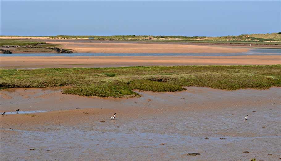 5. birds tiptoe through the mud- norfolk