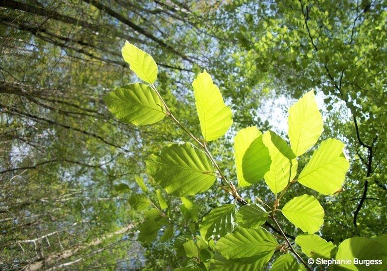 57 Springtime in Pontrhydygroes, Ceredigion
