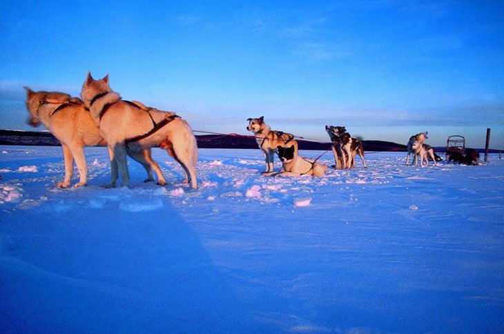 61 Norway   Husky Sledding Through Rondane National Park