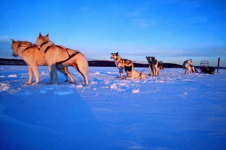 Norway – Husky Sledding Through Rondane National Park