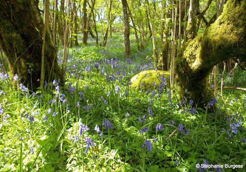 66 Springtime in Pontrhydygroes, Ceredigion