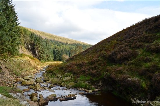 7-Woodland-and-Heather-derbyshire Wanders around Snake Pass