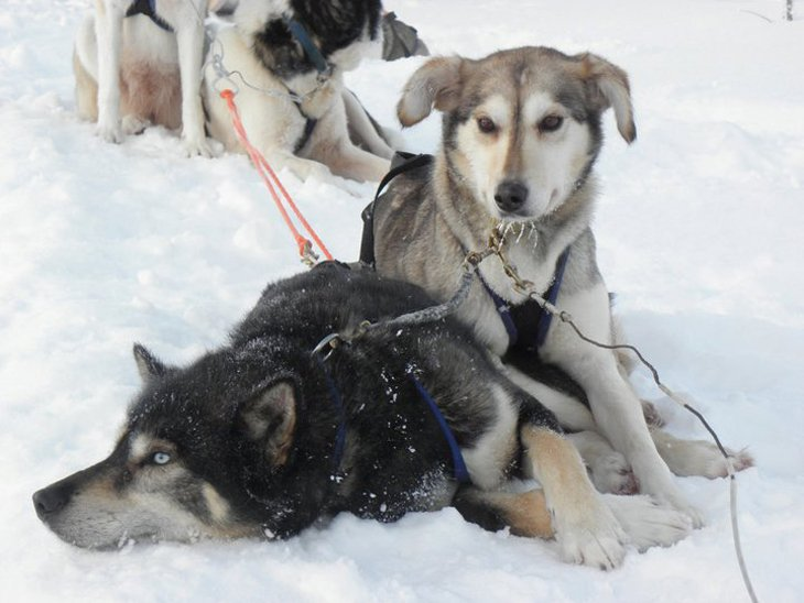 Norway - Husky Sledding Through Rondane National Park