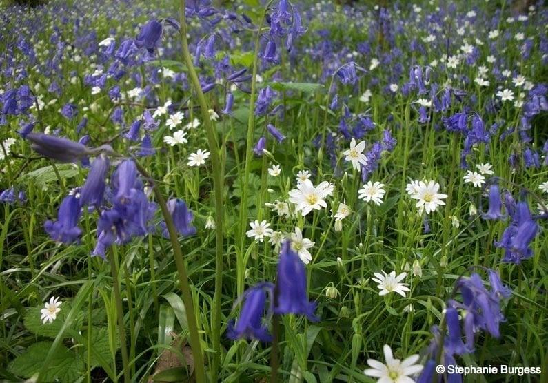 77 Springtime in Pontrhydygroes, Ceredigion