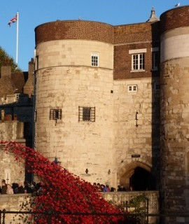 8.-Poppies-infront-of-Middle-Tower