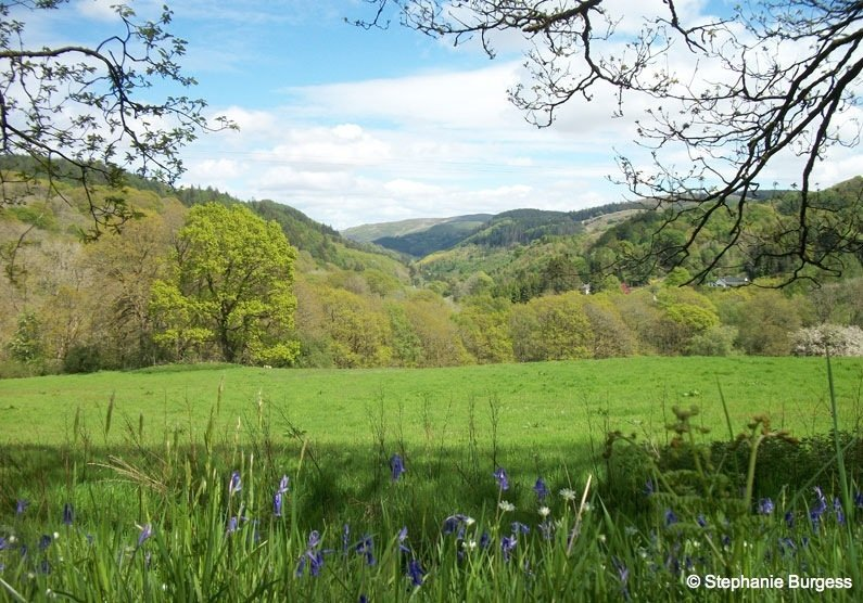 86 Springtime in Pontrhydygroes, Ceredigion