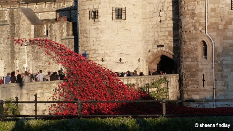 9.-Poppies-infront-of-Middle-Tower-2 The Tower of London and the 100 year anniversary of the First World War