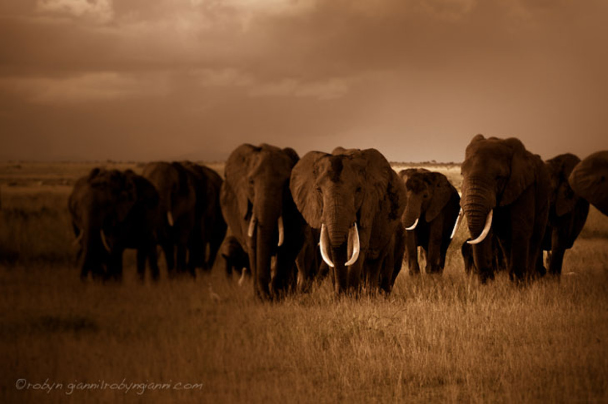 Moments With The Elephants Of East Africa