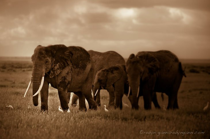 Amboseli_National_Park_Africa_3 Moments With The Elephants Of East Africa