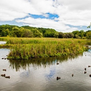 New York – The Solitude of Burden Pond Environmental Park, Troy