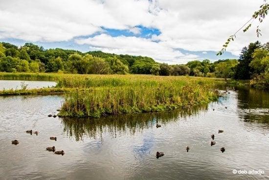 New York – The Solitude of Burden Pond Environmental Park, Troy 1