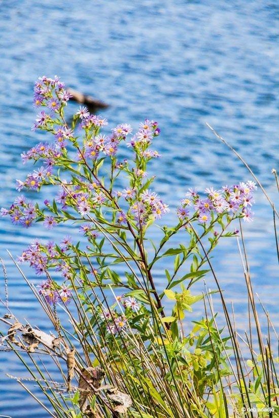 New York – The Solitude of Burden Pond Environmental Park, Troy