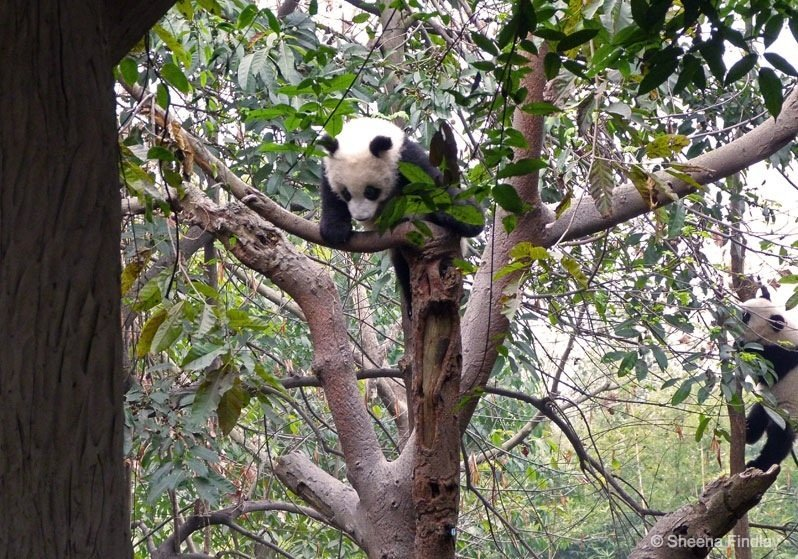 Balancing-act- Chengdu