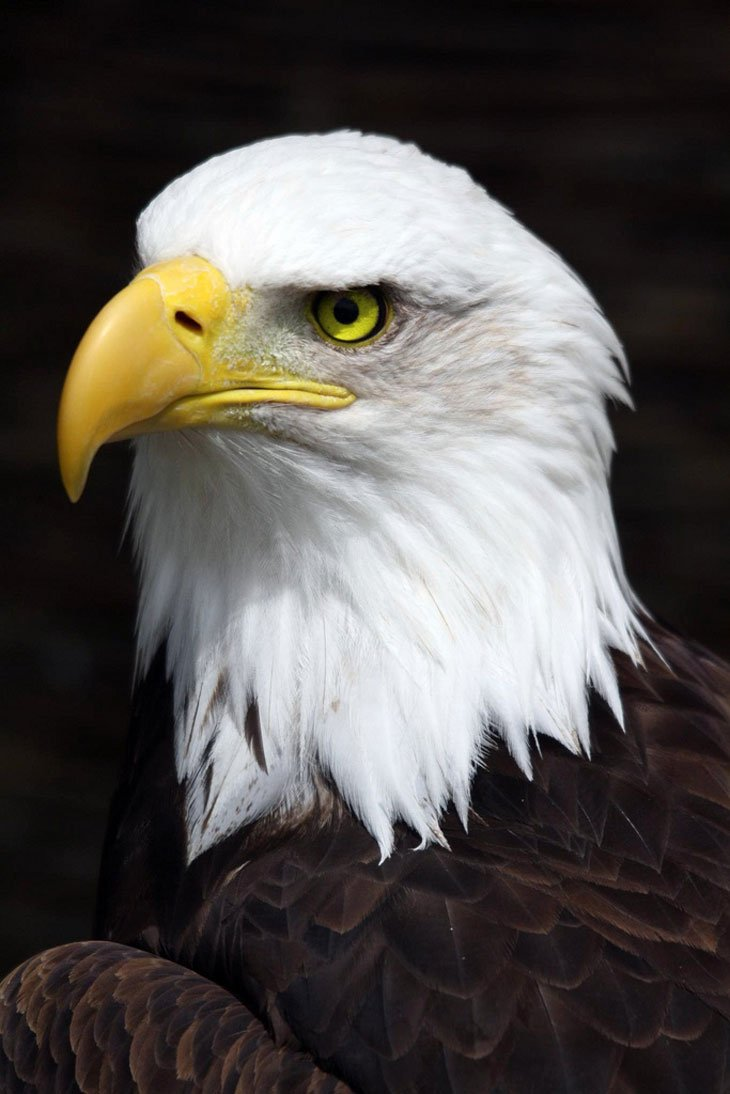 Bald-Eagle Live And Love A Passion For Photography