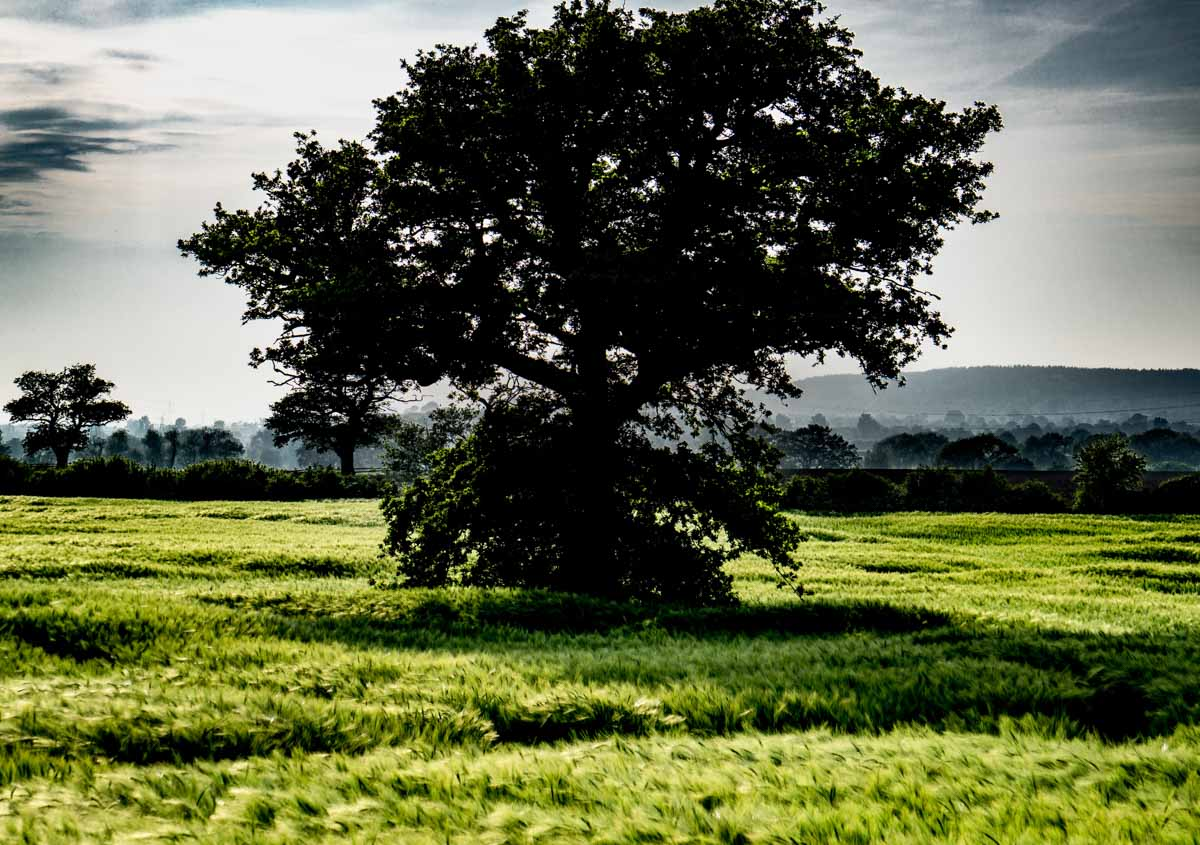 BarrettsField-4-of-20 The Many Glories of Barley