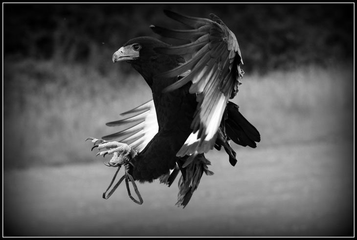 Bateleur-Eagle Live And Love A Passion For Photography