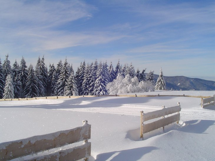 Winter Magic Of The Black Forest 3