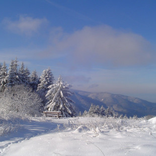 Winter Magic Of The Black Forest