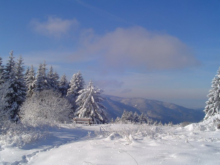 Winter Magic Of The Black Forest 1