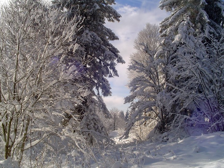 Winter Magic Of The Black Forest 4