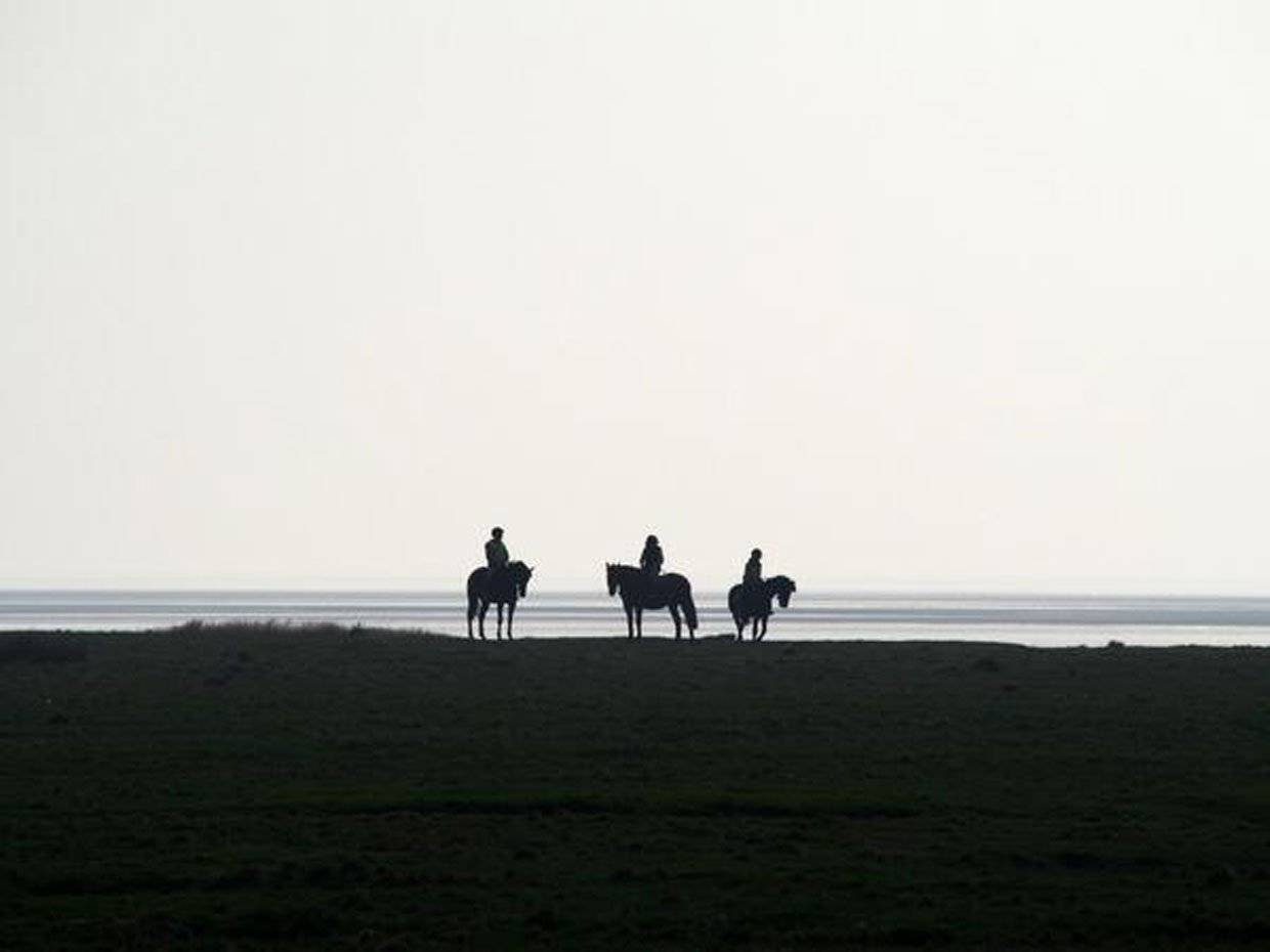 BlrZuHTCIAA-apn Horses in the frame