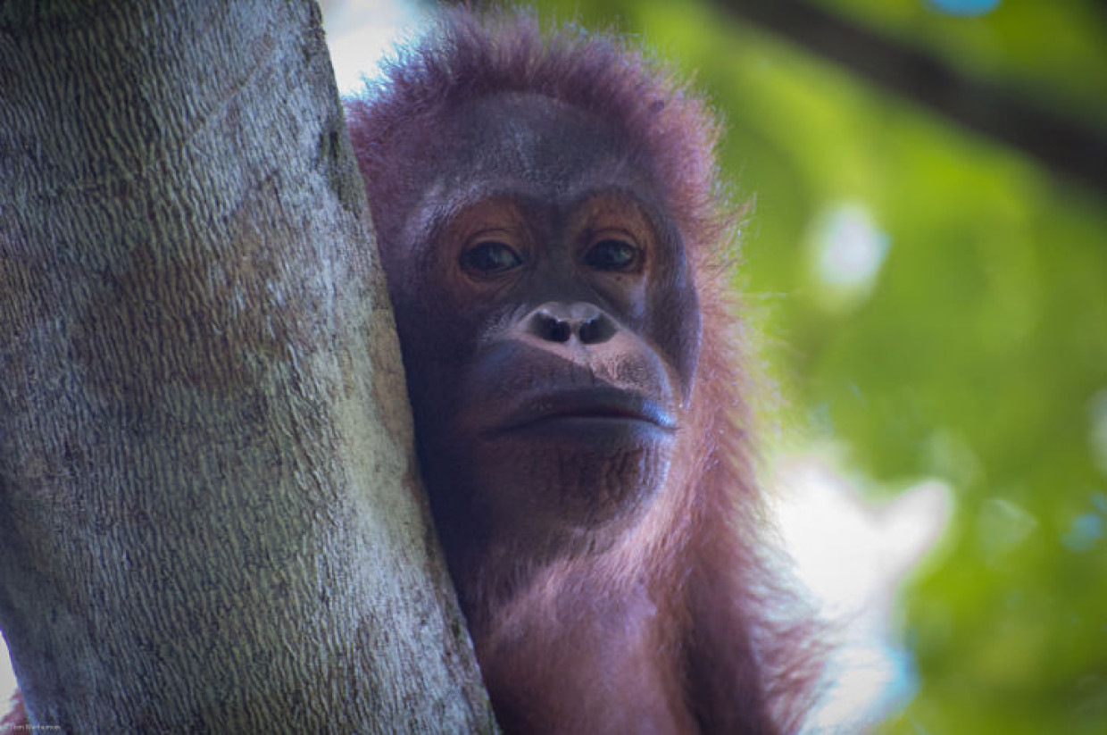 Borneo: A Gorgeous Journey Of Wildlife And Rainforest