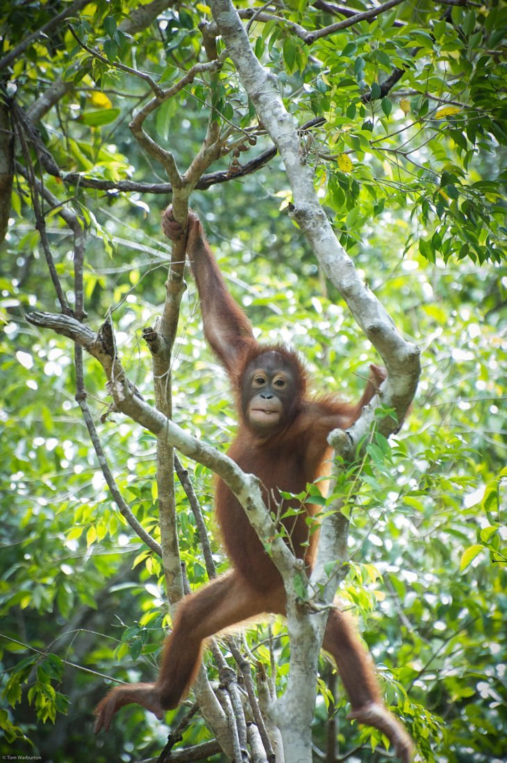 Borneo 15 opt 1 Borneo: A Gorgeous Journey Of Wildlife And Rainforest