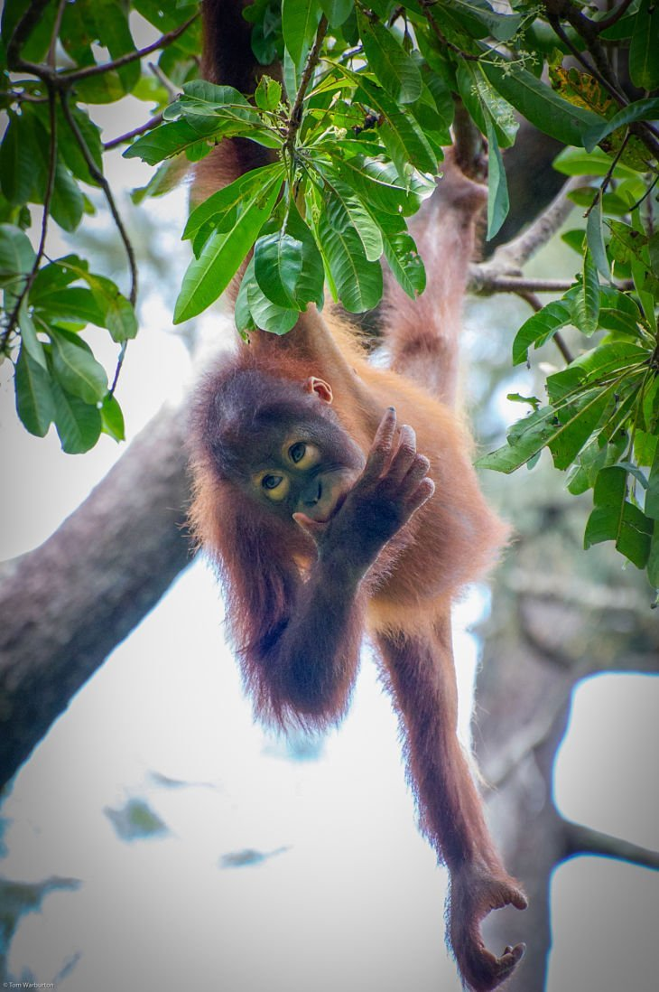 Borneo 16 opt 1 Borneo: A Gorgeous Journey Of Wildlife And Rainforest